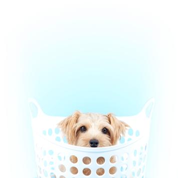 Produits de soins animaliers